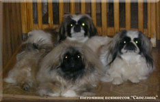 Belka and her daughters - Sima and Nilka