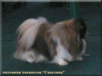 Ellina Sher from Savelina in a Dog Show